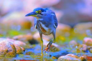 2021内蒙古东胜区正东小学教师招聘1人公告