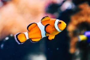 2021上半年内蒙古工业和信息化厅招聘11人简章